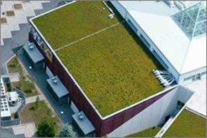 Progettazione giardini roma for Progettazione giardini pensili